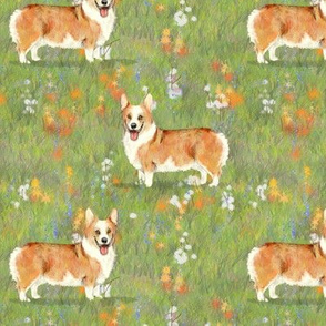 Red_and_white_pembroke_corgi_on_wildflower_field
