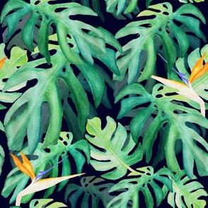 Tropical leaves & strelitzias