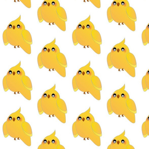 Cute yellow Cockatiel bird