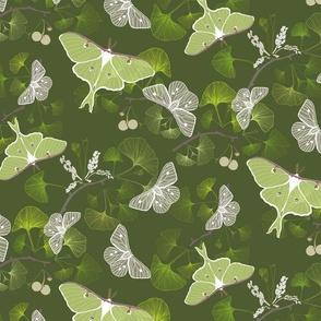 Butterflies Luna Moth Green