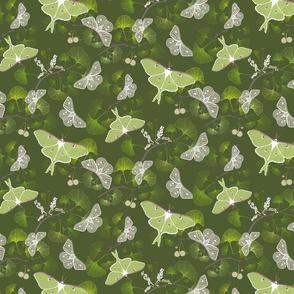 Butterflies Luna Moth Green Small Scale