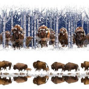 Snowy Canadian Wildlife: Buffalo