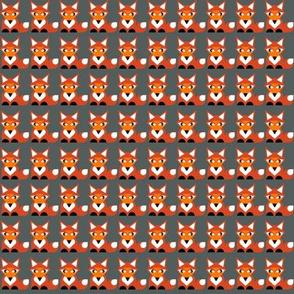 only fox dark grey background