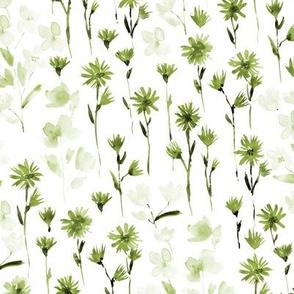 Khaki bloom in Verona - watercolor flowers - blooming wildflowers spring in olive green