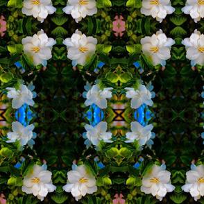 gardenia square