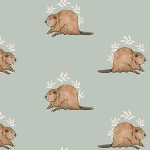Canadian wildlife - beaver