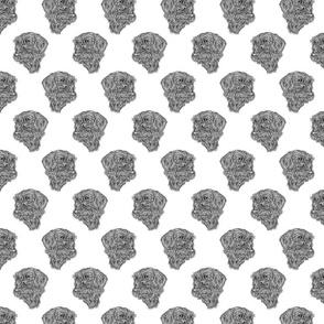 Wire-haired Dachshund sketch - black/white