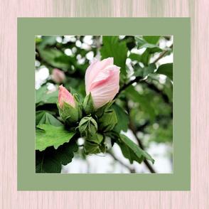Rose of Sharon mini quilt pillow