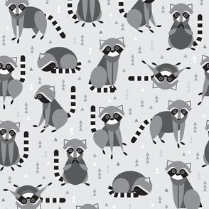 raccoons on gray