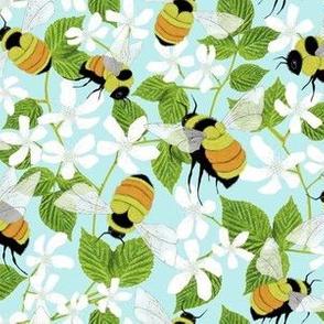 Tricoloured Bumblebee