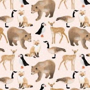 Canadian animals pink wonderland