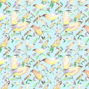Cedar_waxwing_%2c_bird_of_quebeq