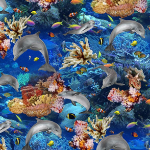 Dolphins Swimming Around Tropical Coral Reef