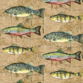 Freshwater Fish of Canada