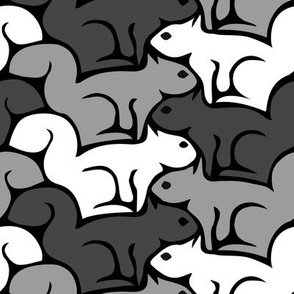 Canadian Squirrels - black, white, and grey squirrel