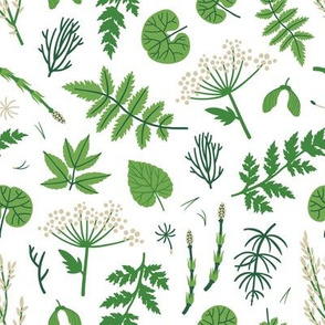 Forest plants. Botanical print