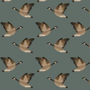 Large Birds - Goose