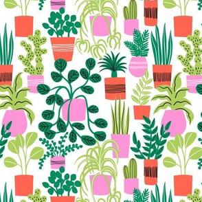 house plants 2