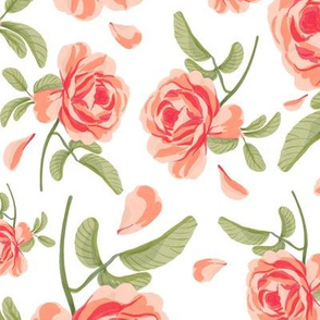 Pink & red rose flowers on white backdrop for home decor and country interiors 0376
