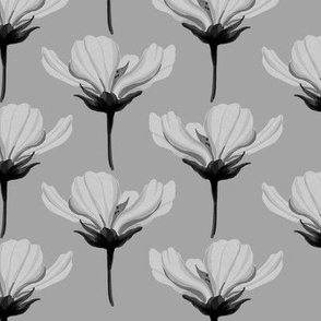 Black and white cosmea chamomile elegant flowers 0385