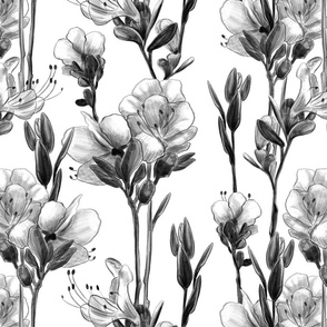 Rhododendron flowers black and white pencil drawing 0418