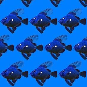 John Dory Fish deep colors on sea blue