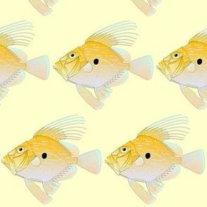 John Dory Fish on yellow