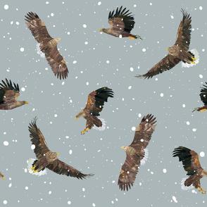 Britains biggest bird - White tailed eagle