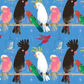 Noisy cockatoos large