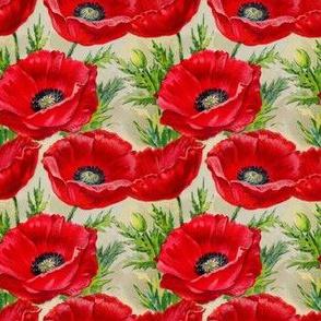 Red vintage poppies