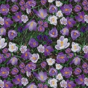 Spring crocus print