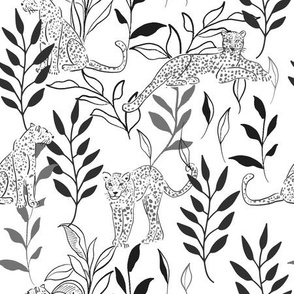 Leopards - black and white