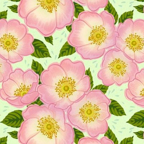 Dog Rose Flower
