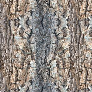 Cottonwood Bark by DulciArt,LLC
