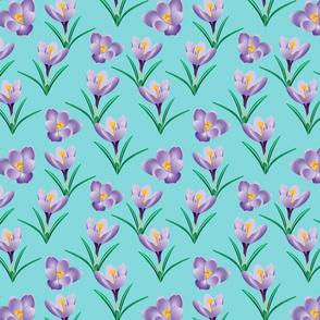 Spring Crocuses 2