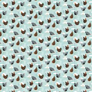 Backyard chickens Main Blue tiny