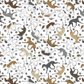 Trotting Italian Greyhounds and paw prints - white