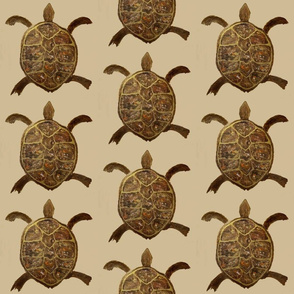 Bronze Back Tortoise-  taupe