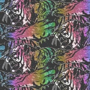 Large rainbow Fierce Tigers