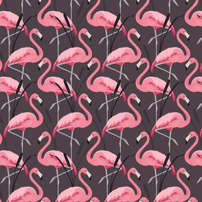 LH_Flamingoes