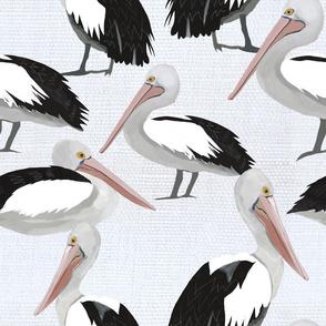 High tide pelicans