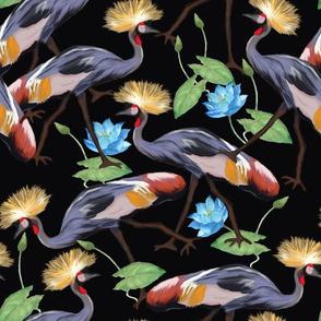 Grey  crowned crane-medium