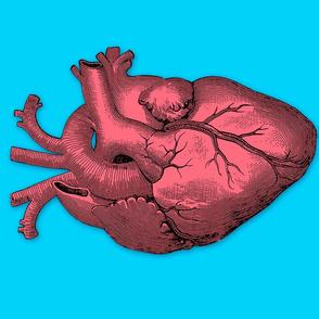 Anatomy Heart 18x24