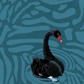 Black swans on swirling water
