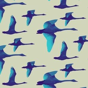Flock of Blue Toned Swans on light background