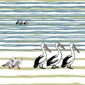 Three Pelican Study by Su_G_©SuSchaefer