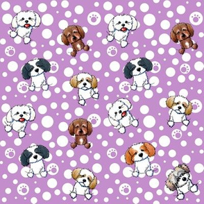 Tiny Shih Tzus and Dots