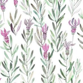 Wild Lavender Watercolor