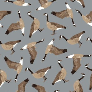 Canada Geese tossed on gray