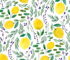 Citrus Limon - © Lucinda Wei